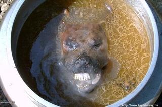 韓国犬肉.jpg